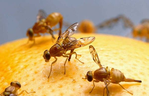 Fruit flies exercising